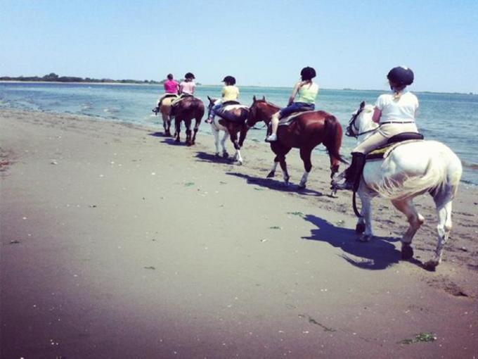 Saddling up in the City: Horseback Riding in Brooklyn NY